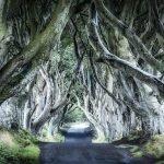 Foresta Irlanda
